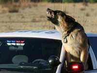 Police K9 & Working Dogs
