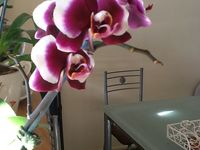 Collections of Orchids