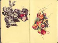 sketching & illustrating