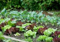 Learn how to grow a successful vegetable garden