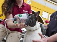 We Donated Pet Oxygen Masks To Over 60 Communities Pets Canine Oxygen Mask