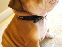 Dogs, Love & Rock