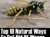 How to get rid of bugs and other pests.