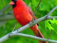 17 Best images about My Florida Backyard Bird List on ...