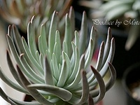 Gardens/Succulents/Fairy Abodes 3