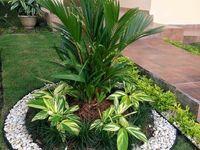 Jardines/ Plantas