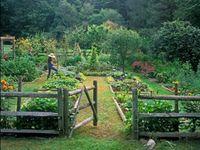 My Dream Yard