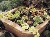 FAVORITE Gardening