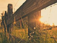 Country Roads, Fences and Barns
