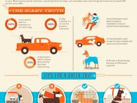 tips on how to successfully traveling with your pet
