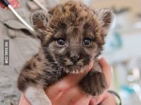 Best cute animals collection on the web