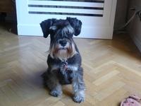 15 best Animales & Mascotas images on Pinterest | Pets, Madrid ...