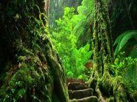 geheimnisvolle natur