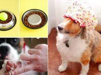 Chien : conseils, astuces & infos / Vous y trouverez des informations utiles et pratiques sur les chiens:  accessoires, alimentation, friandises, dangers, comportement, jouets, soins, vacances, aliments toxiques, pet friendly, prévention, santé   Astuces et conseils chiens  Pour des informations et conseils sur les chiens et les chats :  ▪️blog : http://confidencescelesteetetoile.fr ▪️instagram rdv sur les stories : https://www.instagram.com/pet_sitter_montpellier/ ▪️page Facebook : https://m.facebook.com/Ana-pet-sitter-services-animaliers-499473036772531/