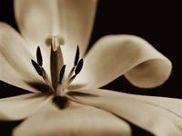Photography & Art