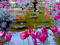 Gorgeous Gardens and Flowers