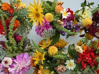 February Flowers / In season in the Adelaide Hills in February