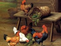 Roosters & Chickens