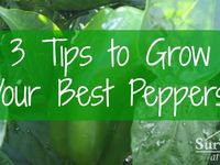 Increase your self-reliance with these helpful agricultural tips.