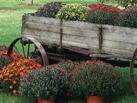 Beautiful country gardens