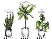 Kasvit ja Puut