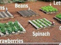 Gardening!!!!
