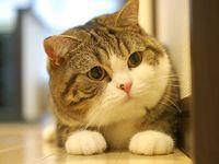 CATS & KITTENS (3)