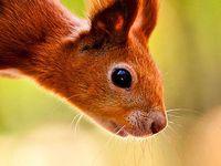 Animals Squirrel / Eekhoorn