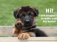 Pups & Animals!