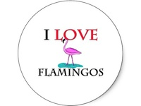 Flamingos and all things quirky