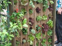 Garden 101