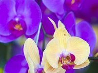 Oh my Orchids!