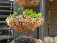 hanging fruit and vegetable baskets
