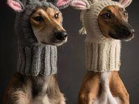 Animal clothes..