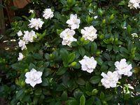 Mi blog de jardineria