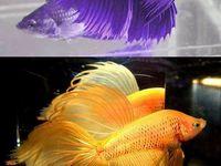 Aquariums/Fish