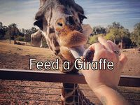 for my love of giraffes