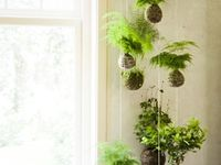 50 Best Japanese Indoor Plants By Cajun Dave Ideas Plants Bonsai Plants Japanese Indoor Plants
