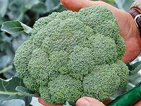 Vegetable varieties we would  like to grow this fall/winter at the Veterans Organic Garden