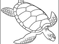 nims island coloring pages - photo#5