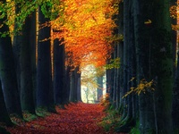 Tree tunnels explicated