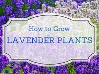 ✿ Gardening Tips / All you need to know  to help you grow your own garden full of veggies, flowers, and herbs. Find  inspiration and ideas, gardening tools you should use and tips for making the bets of your time in the garden,