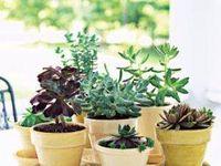 Flower Garden and Indoor plants