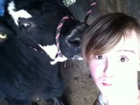 My cattle