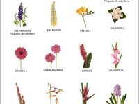 Pallota Flor