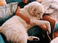 Pin By Aarmau 12123 On Dogs Husky Siberian Husky Dog Dogs