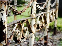 Everything rusty that I would LOVE to use in my garden as trellises or accents among the blossoms!!