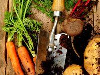 garden-veg and potager