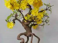 Jak Pielegnowac Kamelie Porady Leroy Merlin Orchids Beautiful Orchids Flowers
