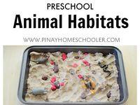 Animals (barn, ocean, dinos, pets)